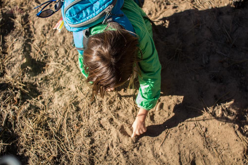Creating her own bear tracks