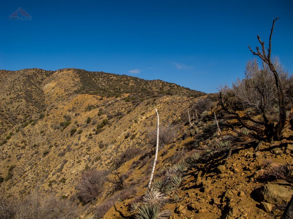 The ridgeline on the way to Fox Mountain