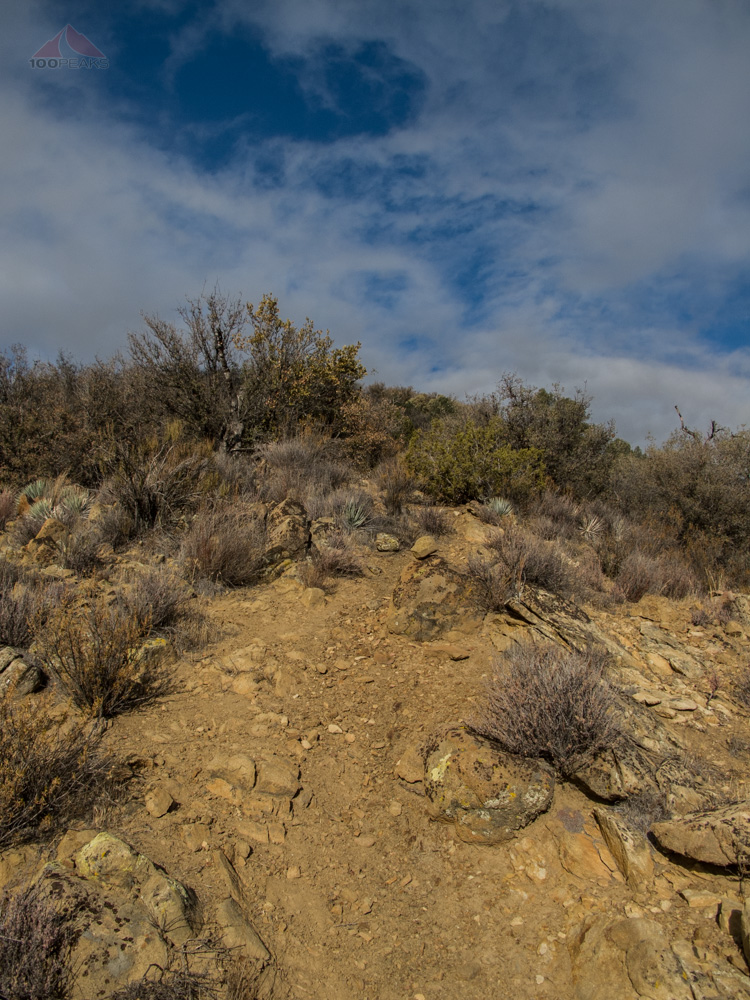 The trail to Fox Mountain climbs steeply from the beginning