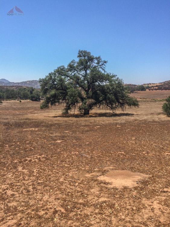 An old oak in Barnett Ranch Preserve
