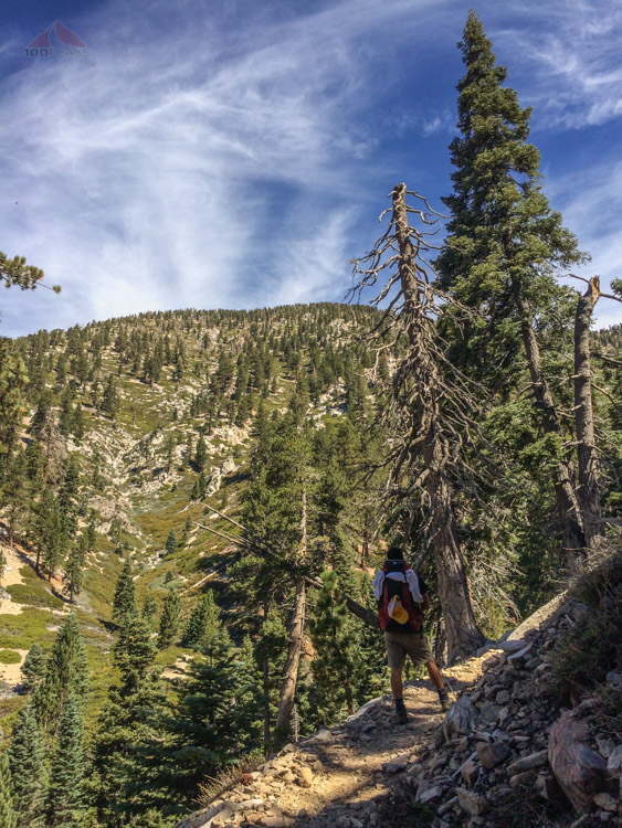 Getting higher on the Vivian Creek Trail