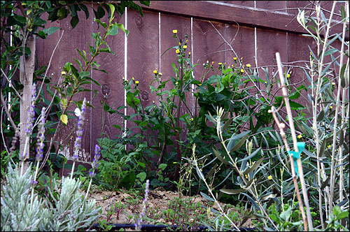 Weeds finding a home atop the slope