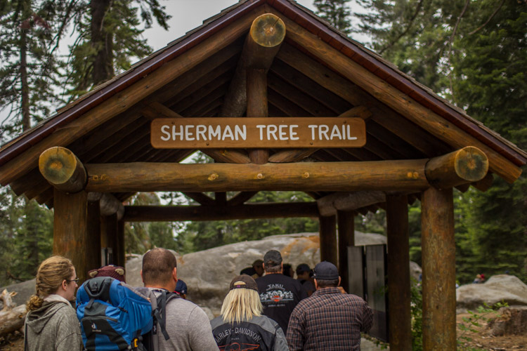 The Sherman Tree Trail