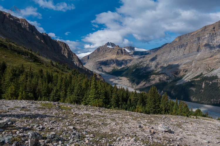 Peyto Peak from Bow Pass