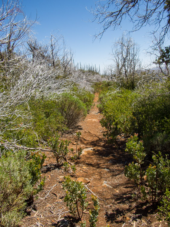Burnt Pine Trail, before it really got overgrown