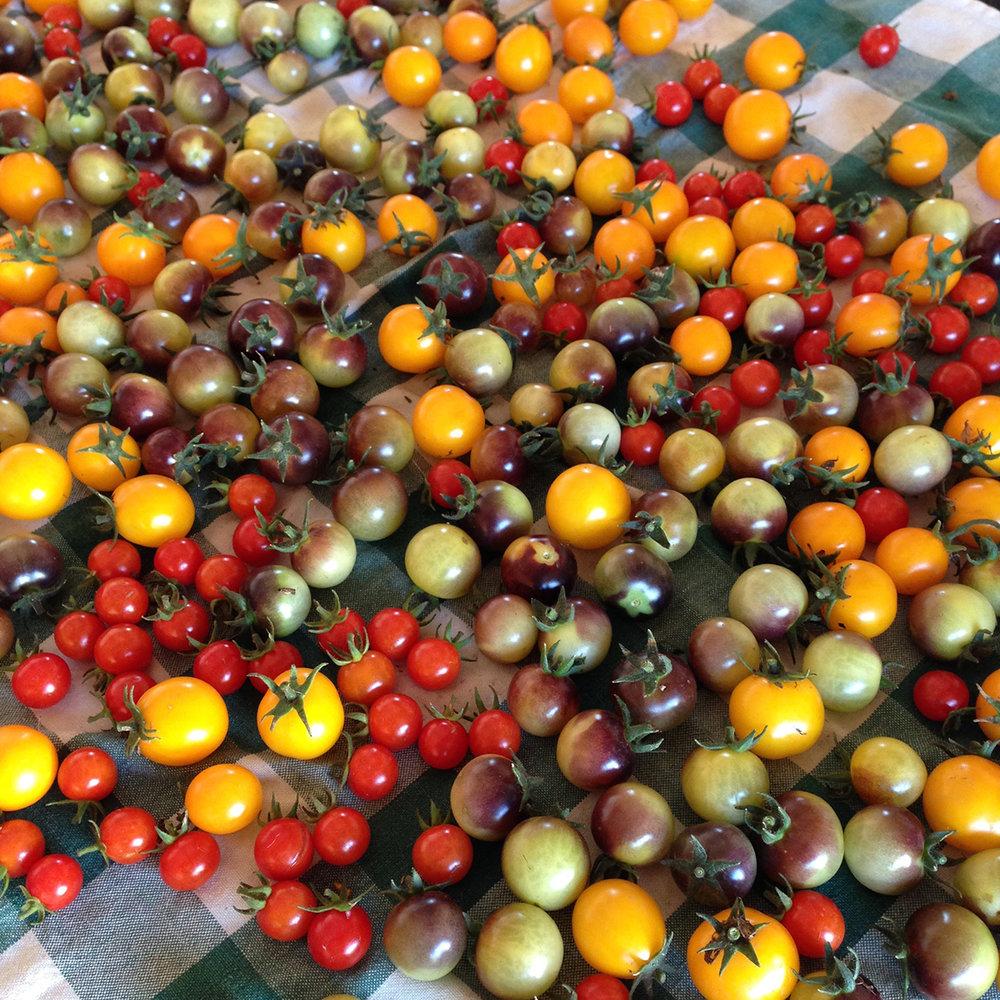 cherry-toms-2-1200px.jpg