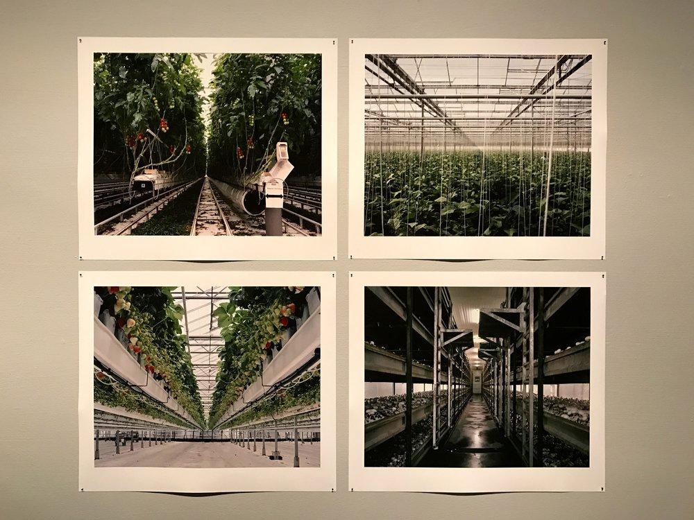 Freya Najade: Strawberries in Winter / Talvimansikat (2011-2013)