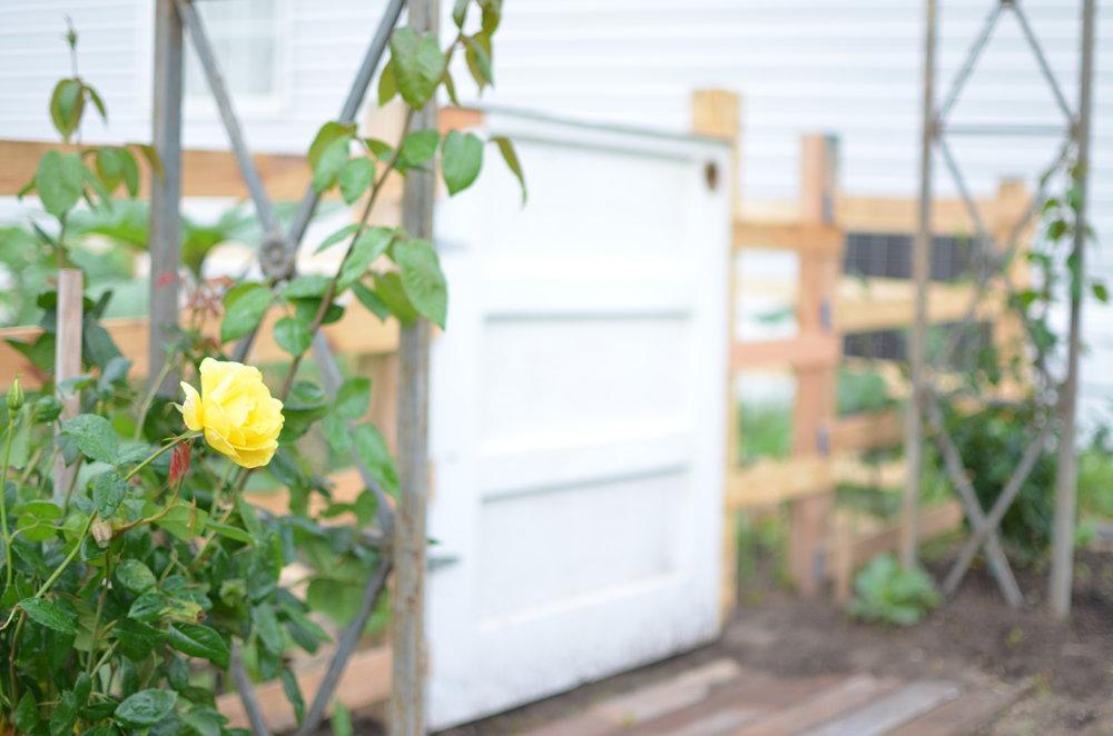 climbing roses garden entry arbor potager