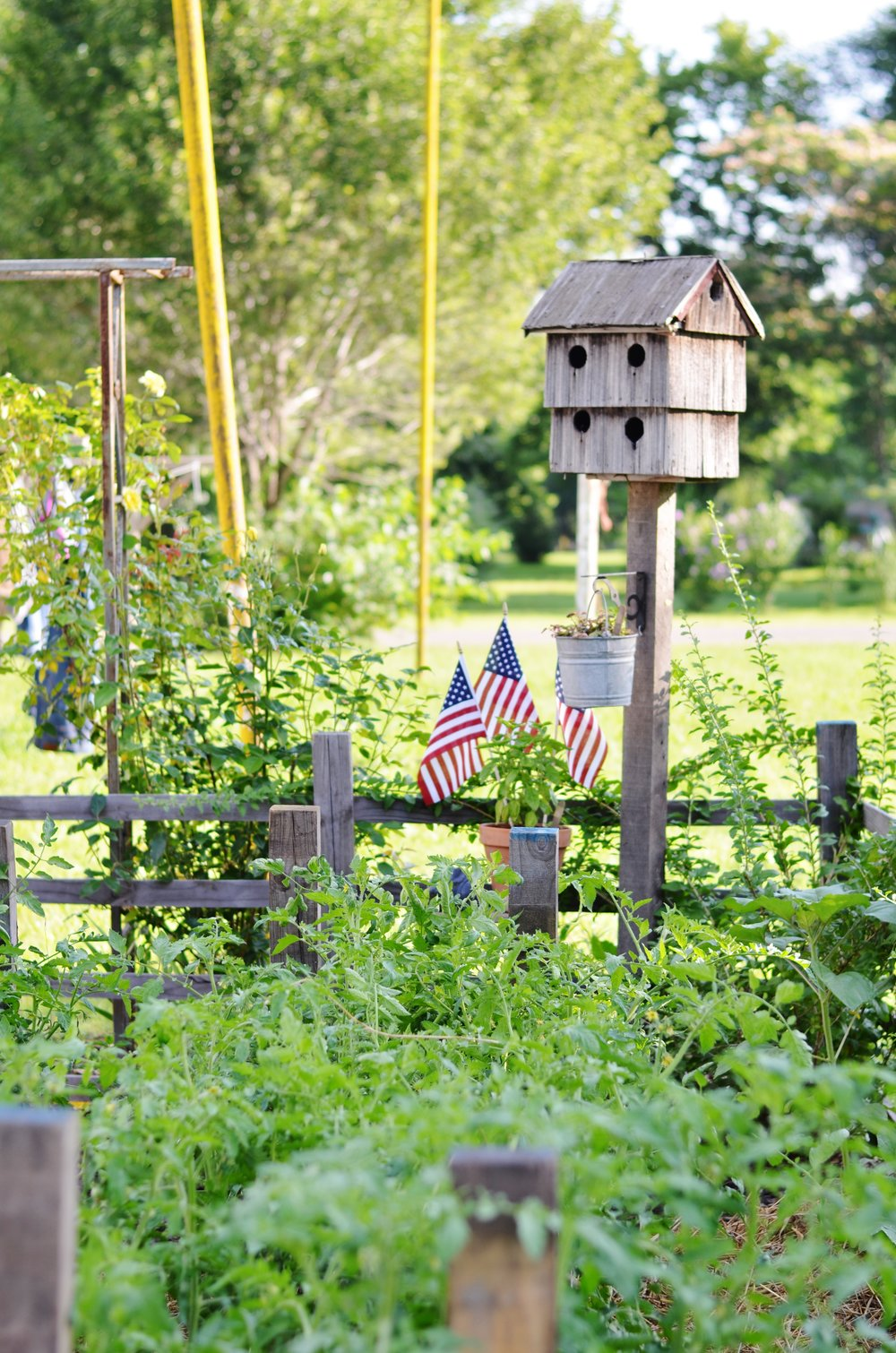 birdhouse garden vegetables flowers heirloom seeds