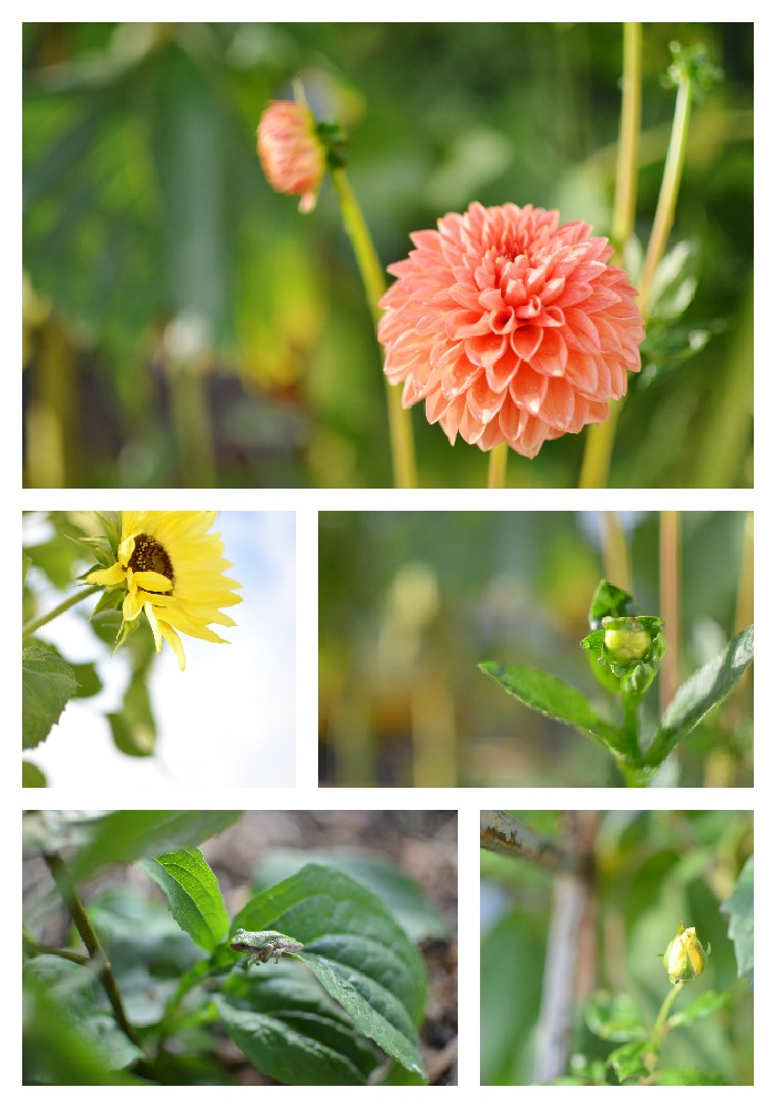 flower garden vegetable garden heirloom