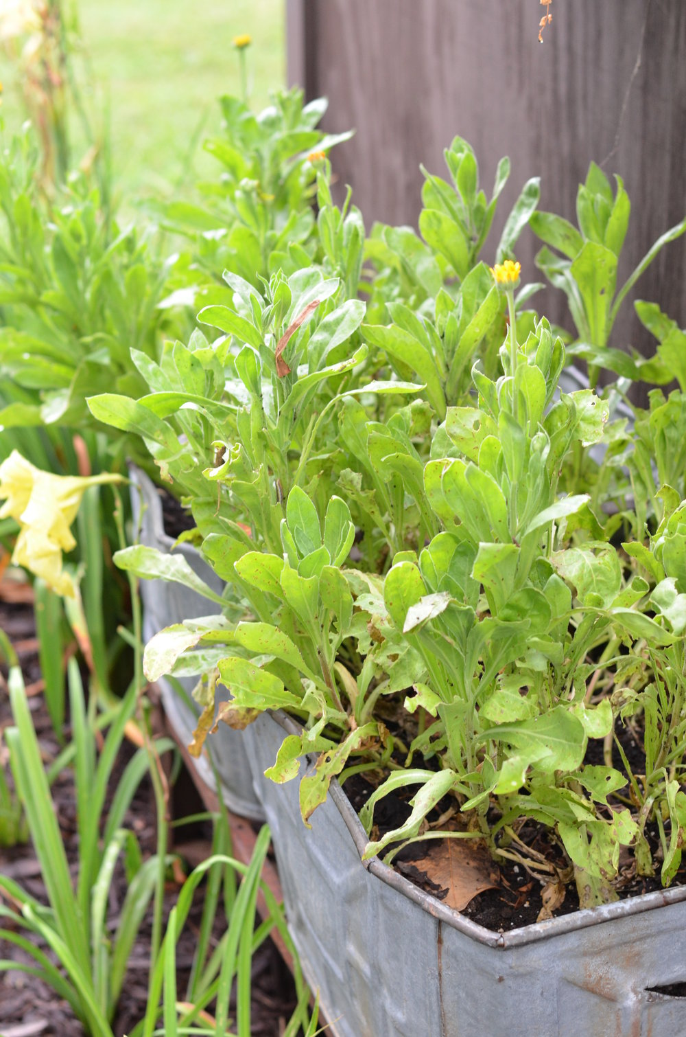 junk garden style in the vegetable garden