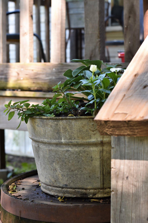 Galvanzied Planter Container