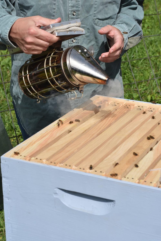 smoking honey bees