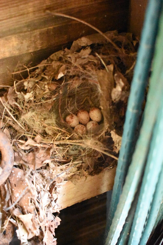 Chikadee Nest