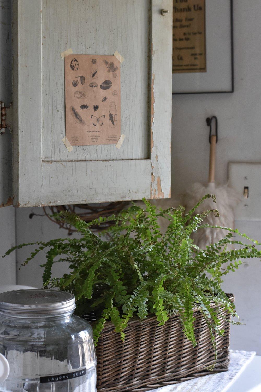 How do you take care of houseplants? www.flatcreekfarmhouse.com