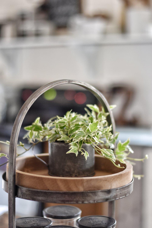 caring for indoor houseplants www.flatcreekfarmhouse.com