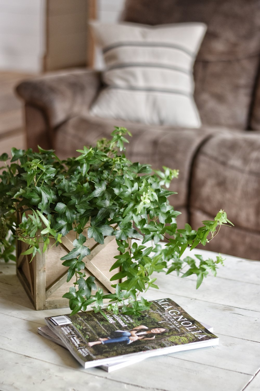 how to care for indoor plants www.flatcreekfarmhouse.com