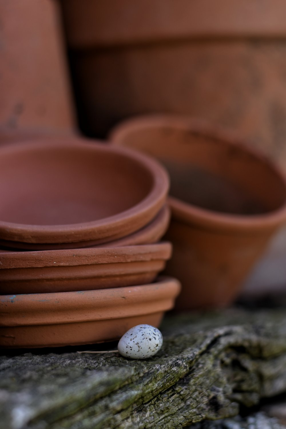 old terra cotta pots with a barn swallow egg