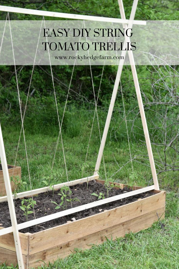 Easy DIY String Tomato Trellis.jpg