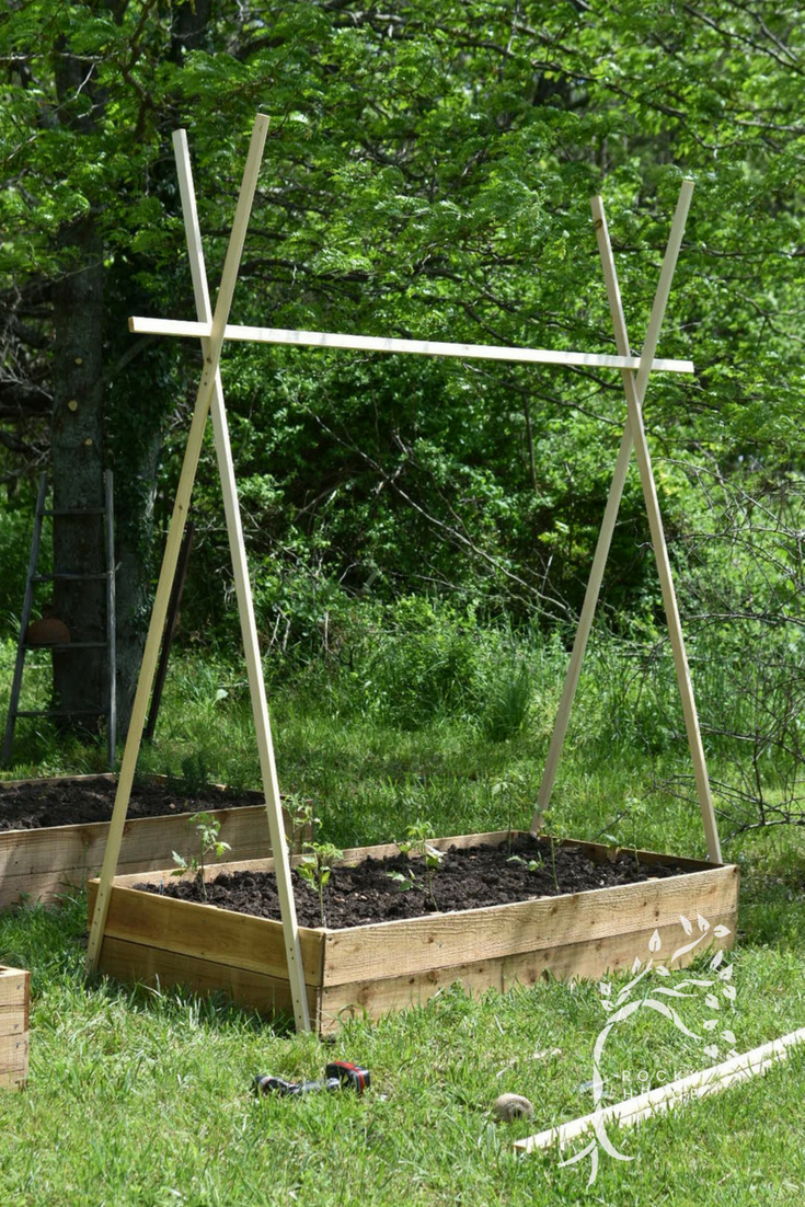 How to Grow Tomatoes on a String Trellis