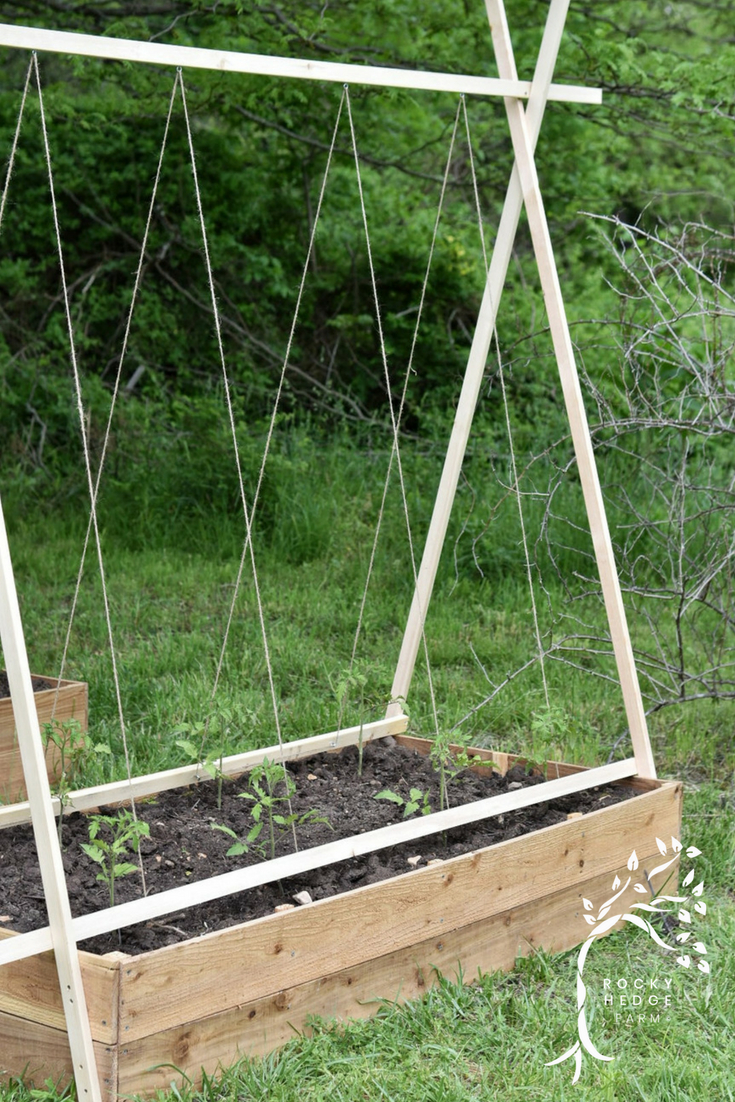 How to Grow Organic Tomatoes on a String Trellis