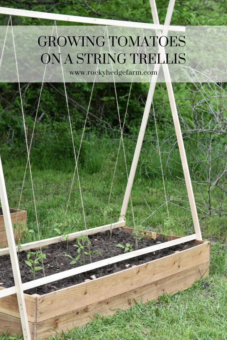 The Best DIY Tomato Trellis
