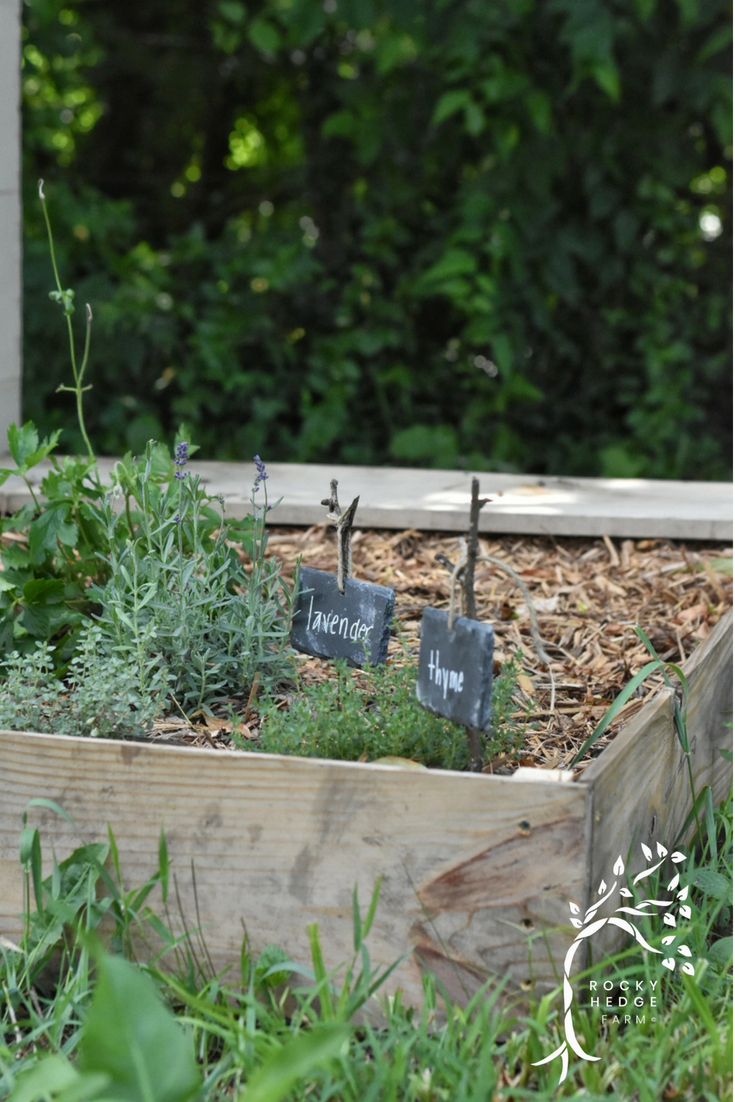 Planting Herbs to Attract Butterflies