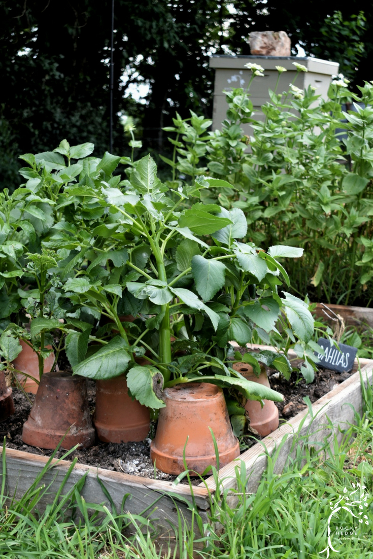 Using terra cotta pots in the garden