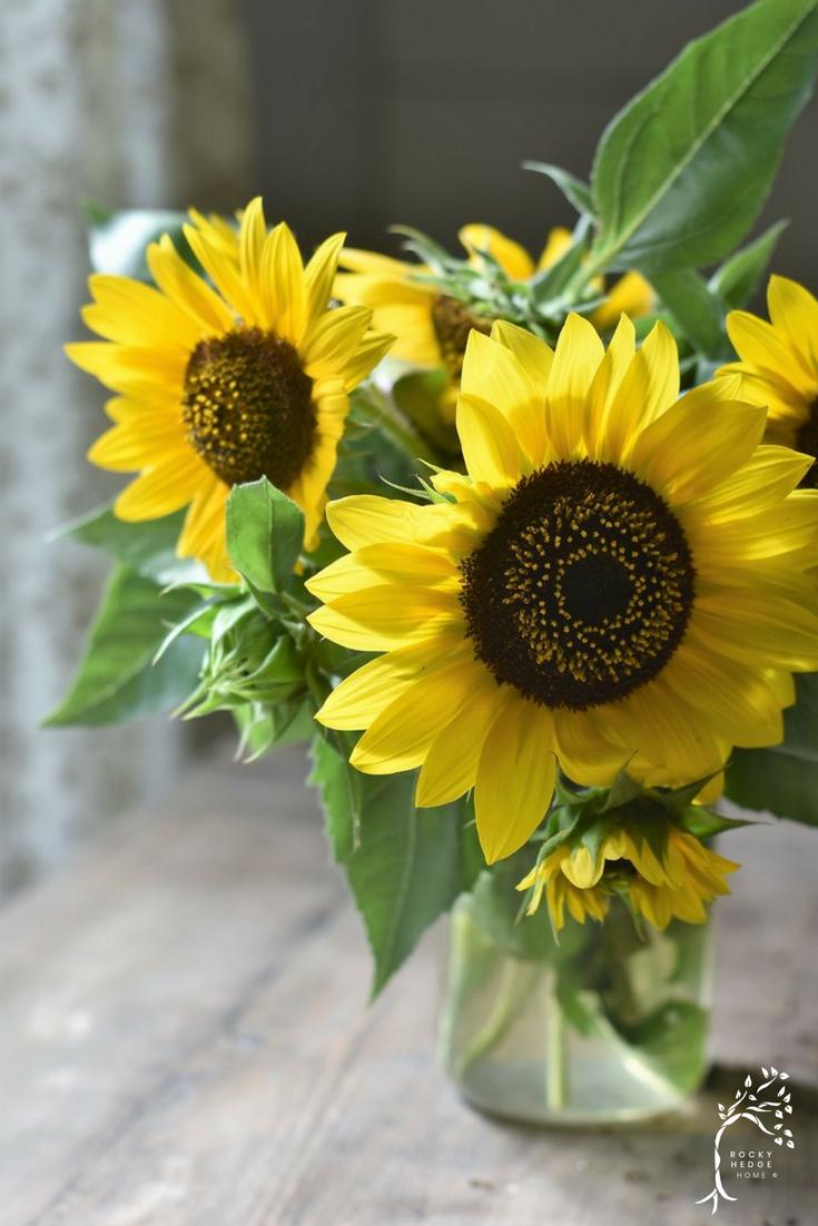 How to Dry Sunflowers for Autumn #farmhousefall #naturalfalldecor #autumn #sunflowers