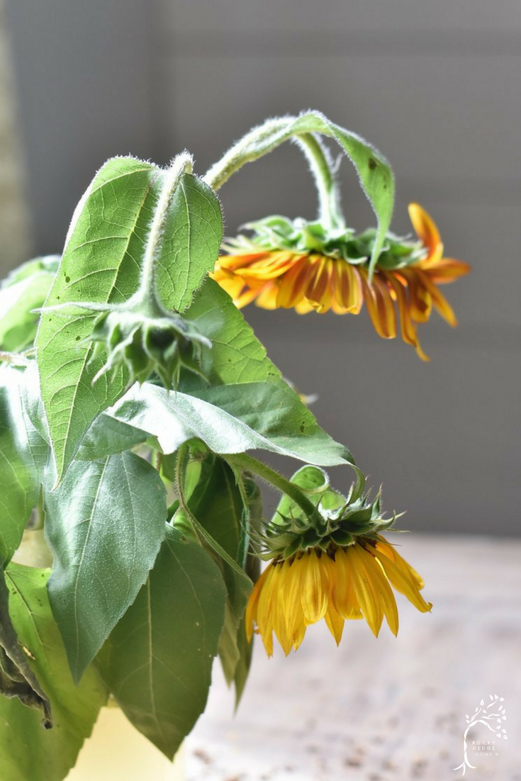 How to Dry Sunflower Heads to use in Fall Decorating
