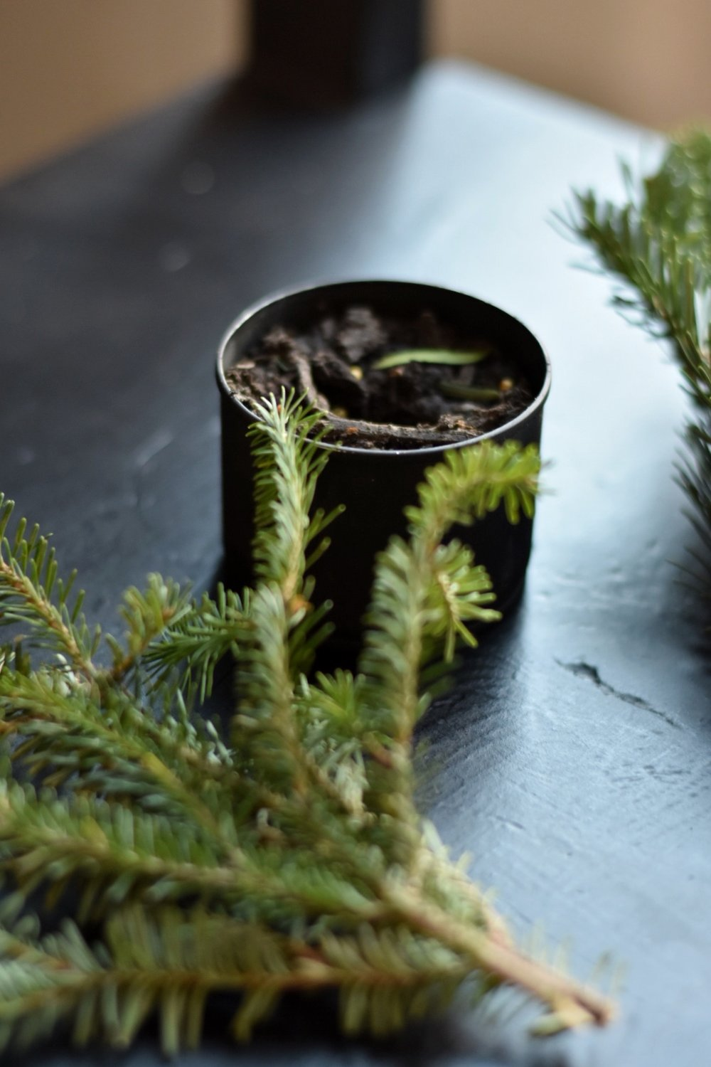 Inexpensive Christmas Decorating - Use Natural Greenery to Decorate for Christmas - Rocky Hedge Farm.jpg