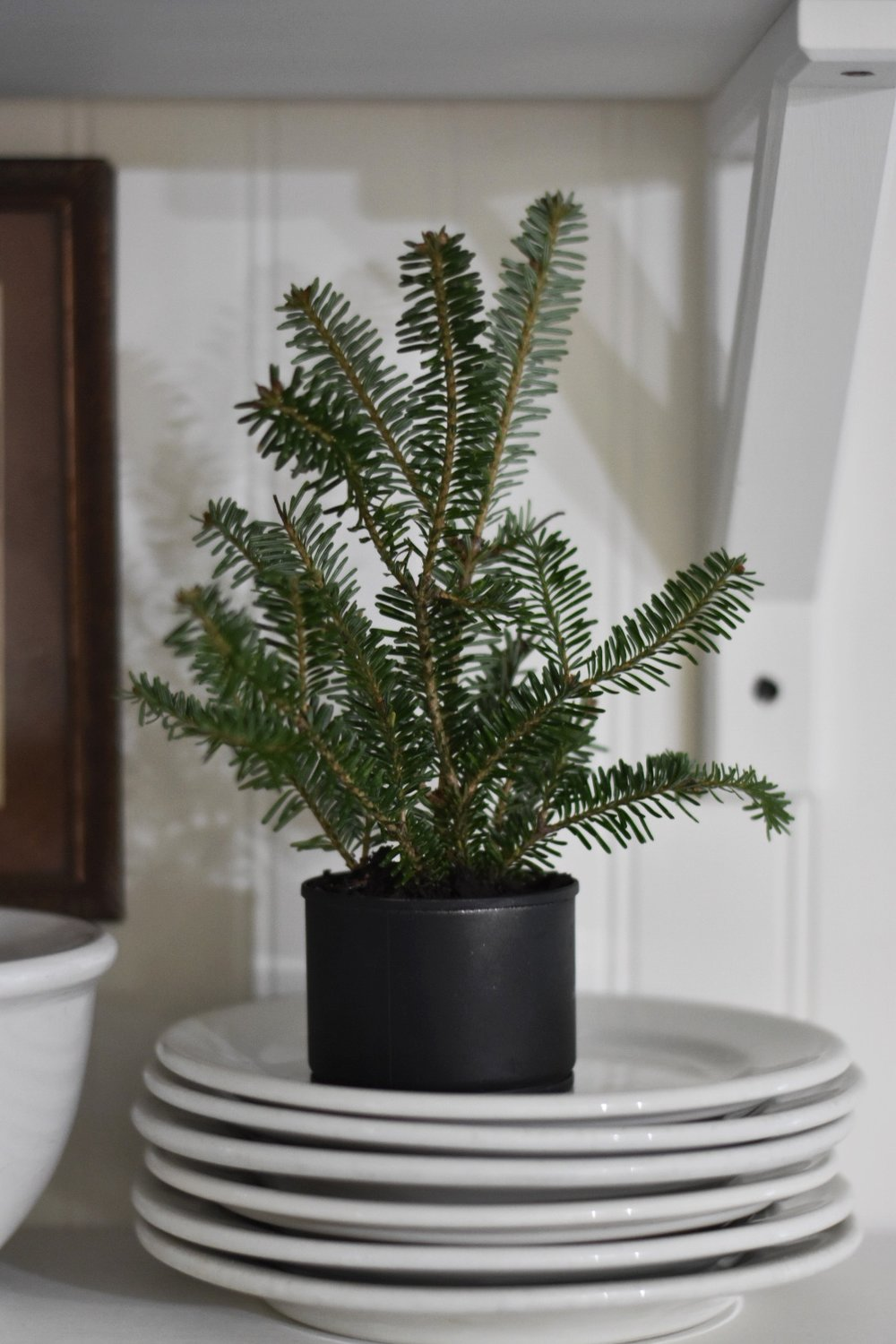 Homemade Christmas Decor Tiny Christmas Tree in a Tin Can - Rocky Hedge Farm