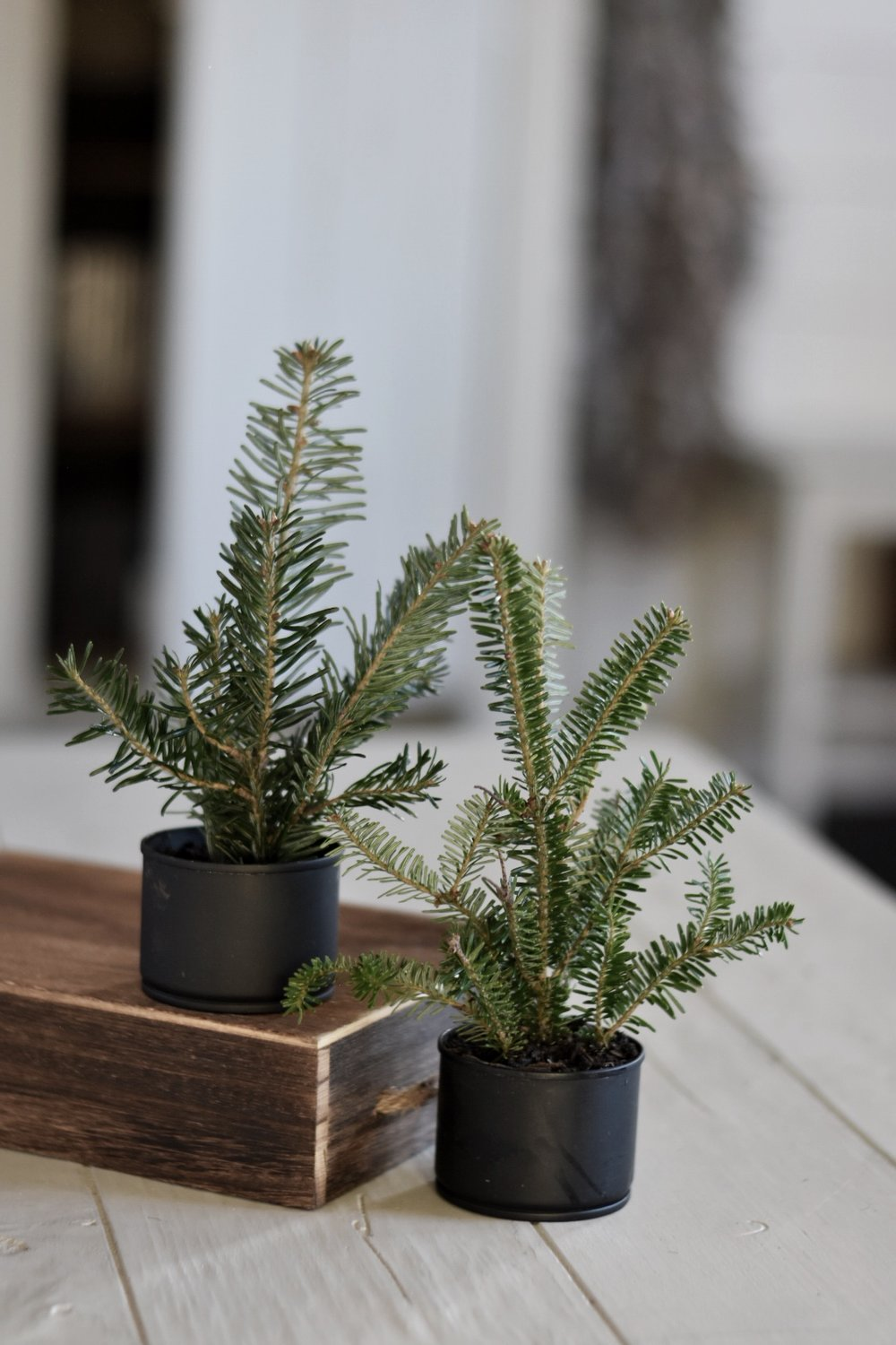 Free Christmas Decorating Ideas Christmas Tree in a Tin Can - Rocky Hedge Farm