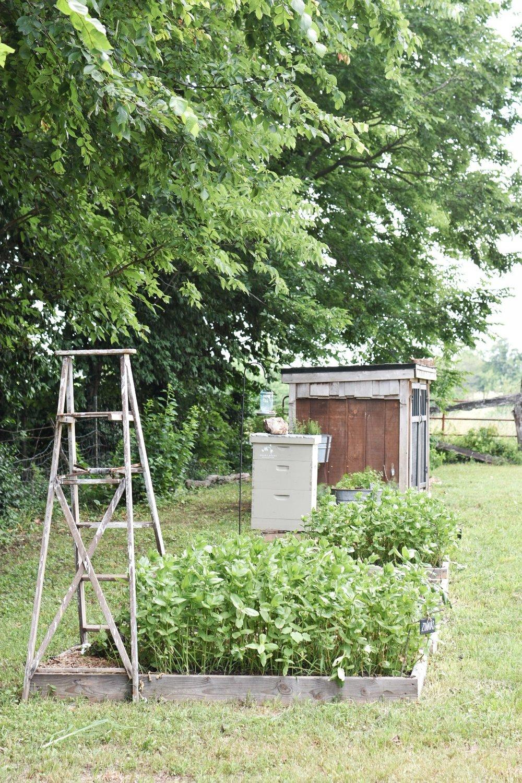 Homestead Farming | Beekeeping |  Raised Garden Beds | Garden Shed | Rocky Hedge Farm