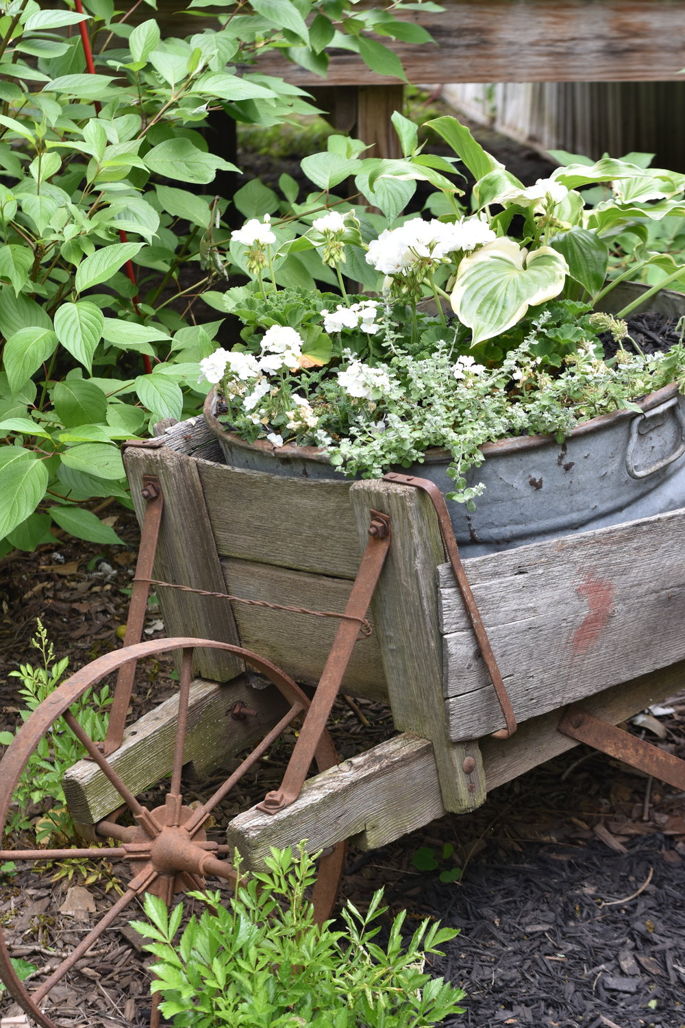 Galvanized bucket planter for flower plants. Old washtub in a wooden rustic wheelbarrow filled with white and green flowers | Rocky Hedge Farm