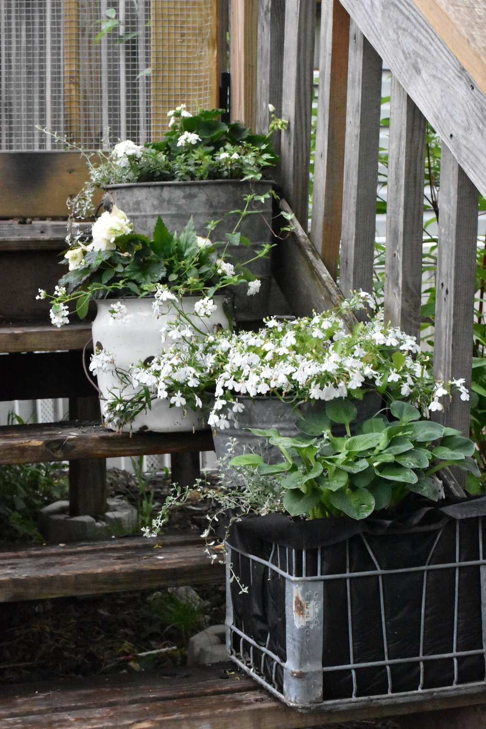 Galvanized Garden Bucket Planter | Rocky Hedge Farm