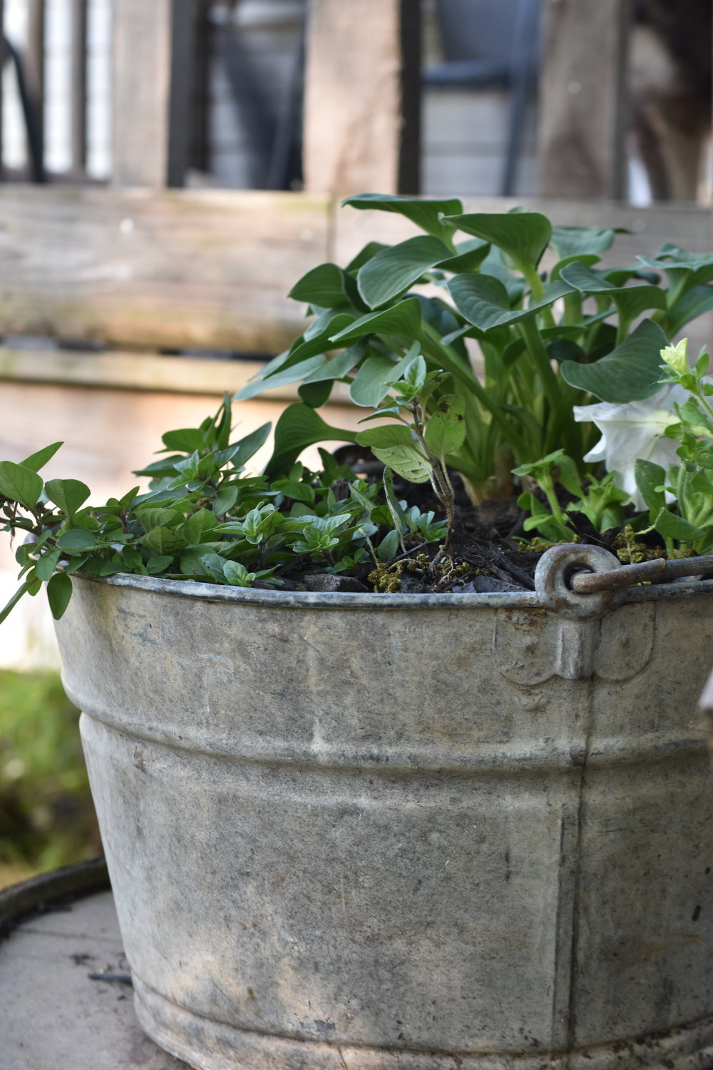 galvanized garden planters | Rocky Hedge Farm