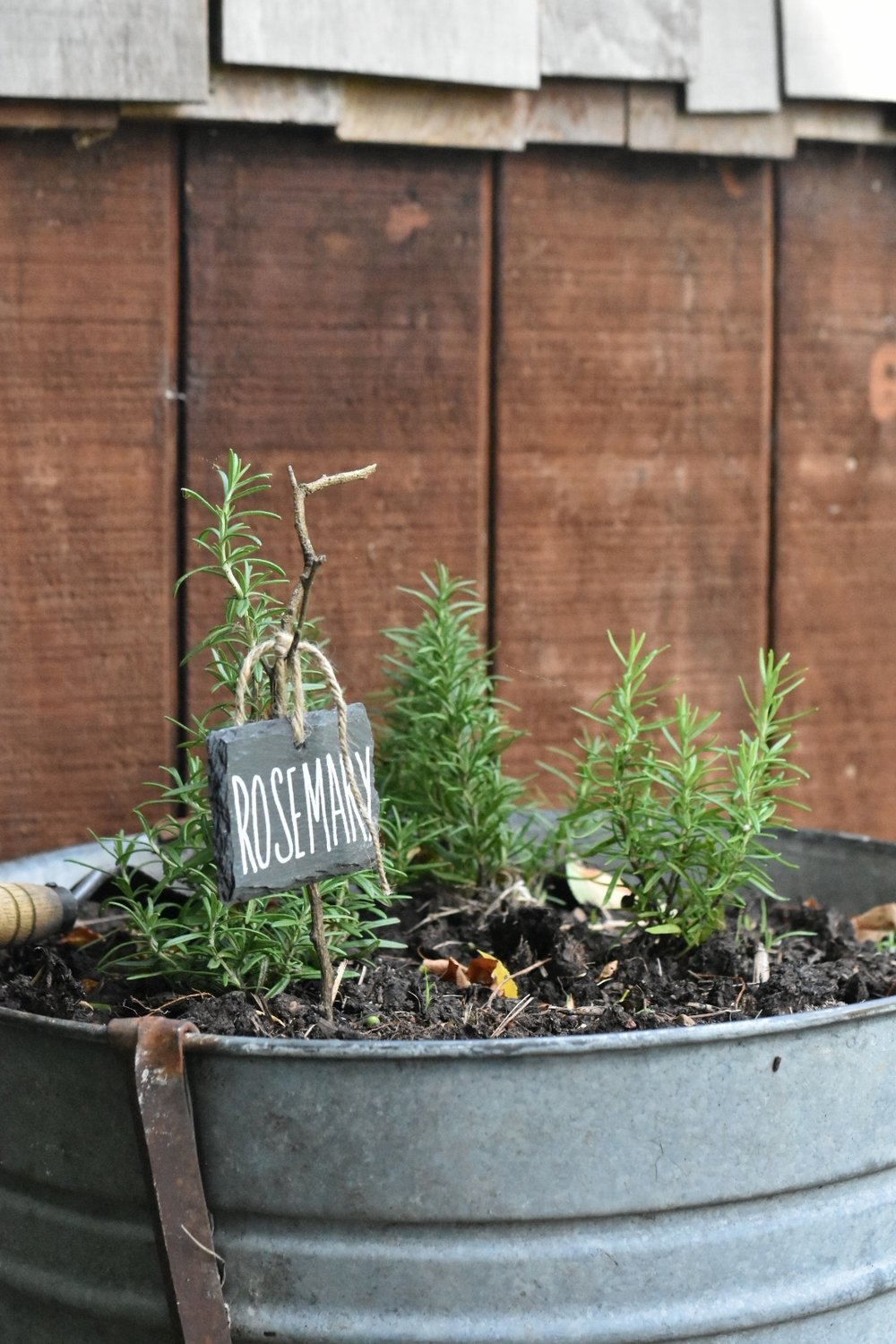 Vintage Galvanized Washtub Herb Garden | Rocky Hedge Farm