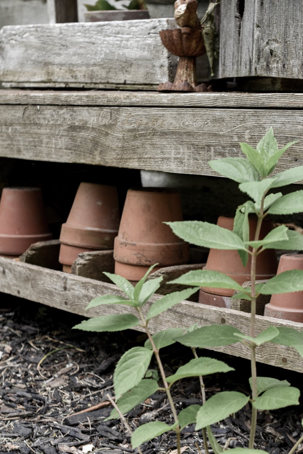 Rustic garden decor with old wooden bench and clay terra cotta pots | Rocky Hedge Farm