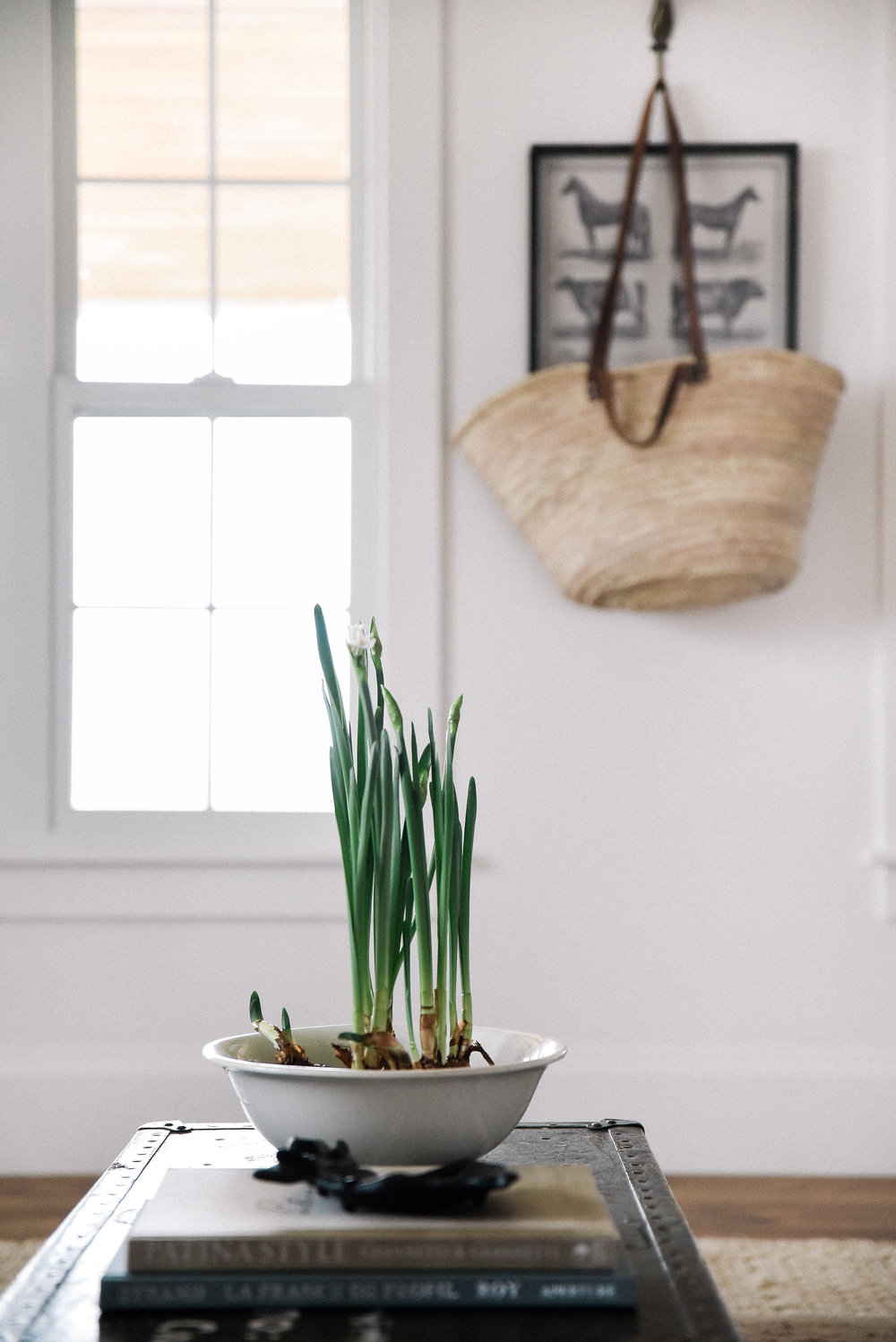 How To Force Spring Bulbs Paper Whites
