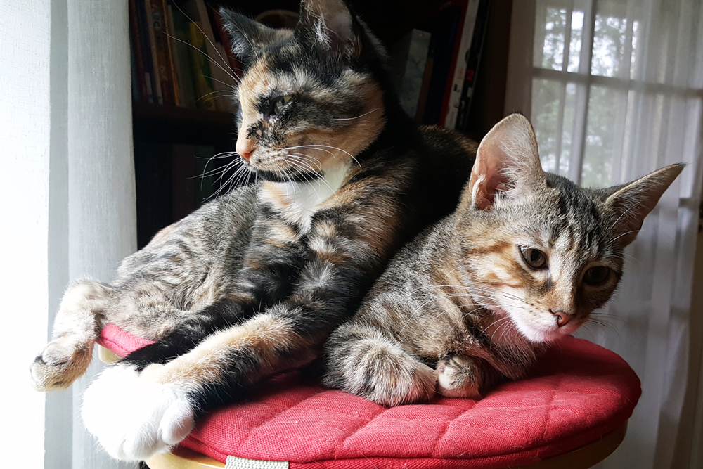Our kittens! Penny, a calico/tortie, and Pepper, a tabby/torbie.