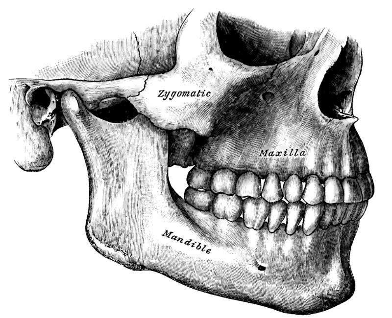 Henry Gray  Anatomy of the Human Body  (1918) . Plate 995. Henry Vandyke Carter.