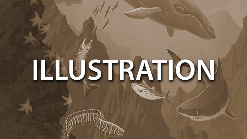 Illustration_Menu.jpg