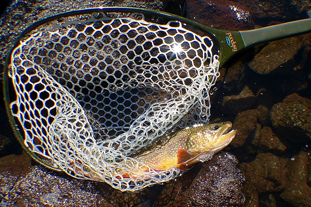 Brook Trout in Fishpond Nomad Fly Fishing Carbon Fiber & Fiberglass composite Mid-Length Net