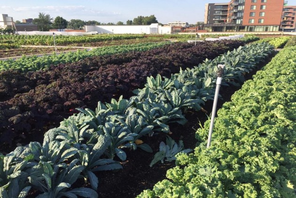 Montreal Supermarket Opens Up A Huge Rooftop Garden Living