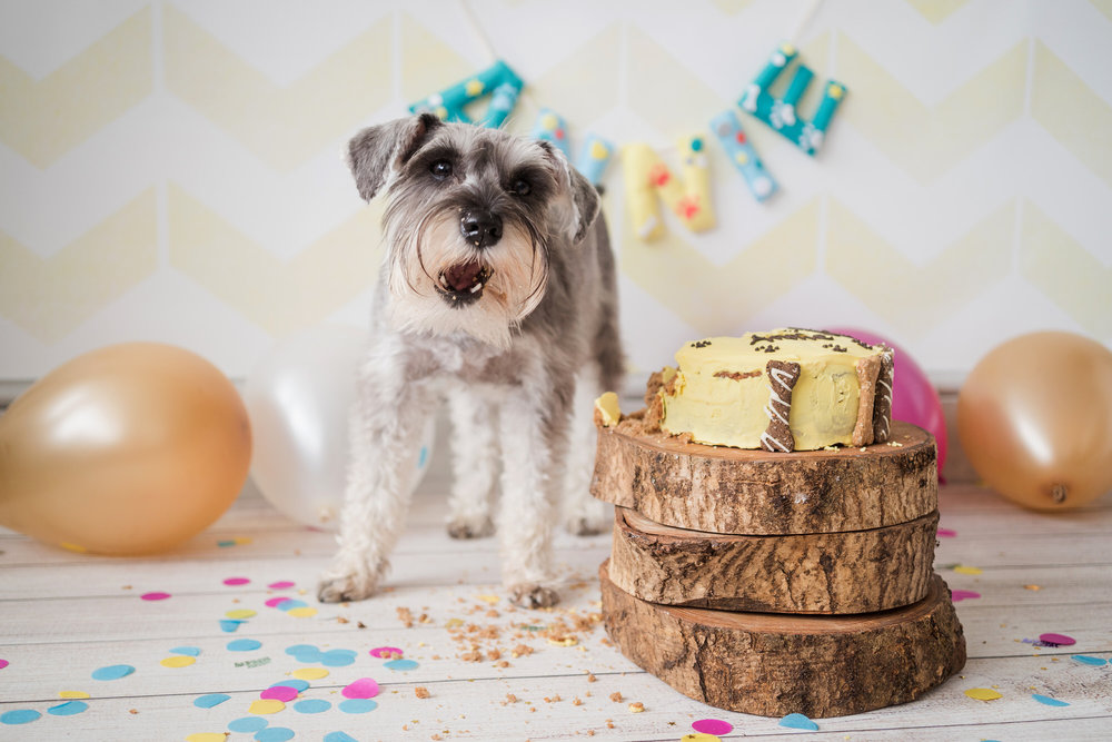 dog first birthday party