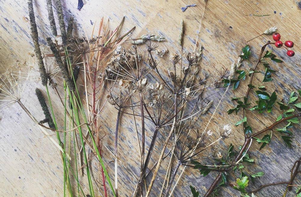 dried-flowers-berries