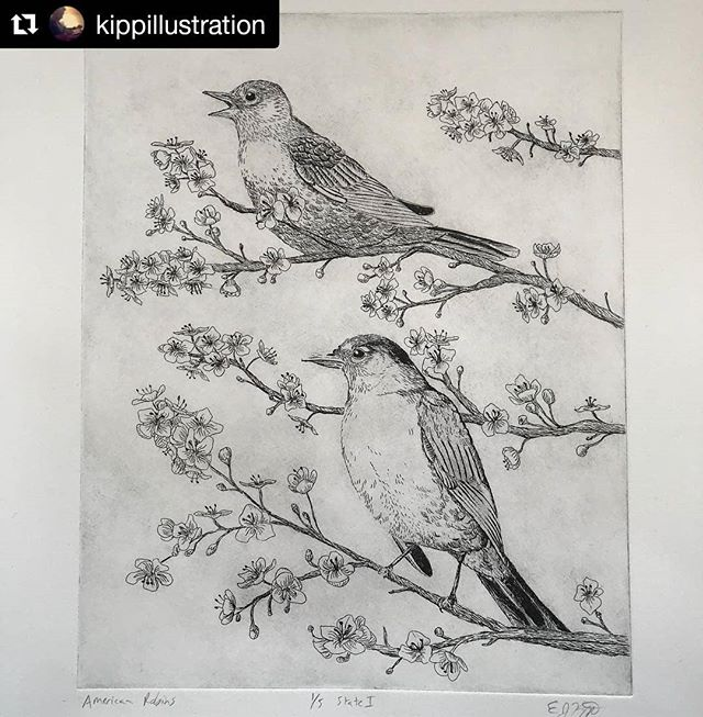 "#Repost @kippillustration Beautiful. Check out this Artist when you get a chance! #justprintmaking #art #artist #artistsofinstagram #print #printmaking #etching #intaglio #birdsofinstagram #bird #robin #natureart #nature #featuredartist . . . ・・・ American robins. Etching. 8x10"""