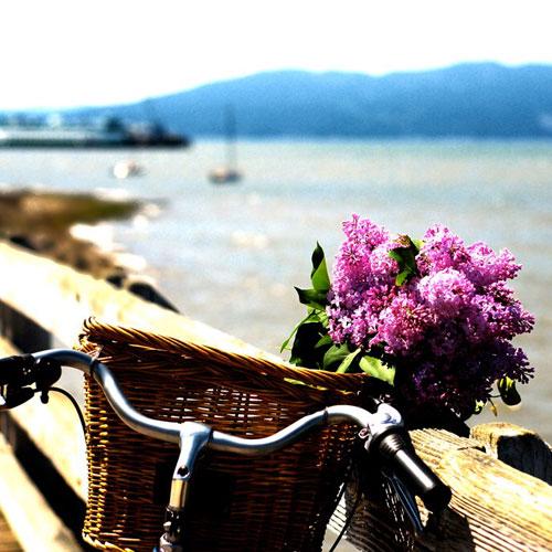 lilac-bike.jpg