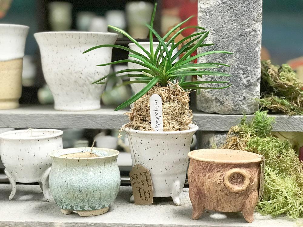 ashley-keller-bonsai-pot-4.jpg